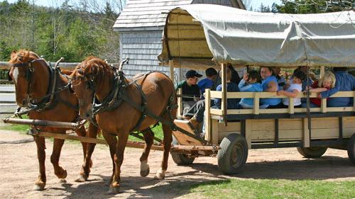 Canadian-Horses-Ross-Farm-Museum