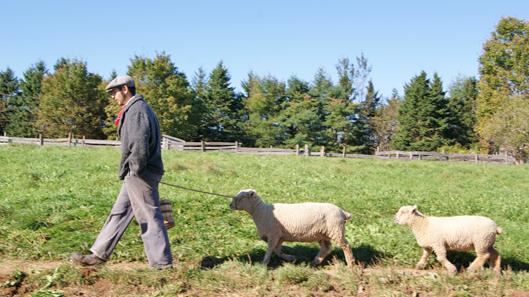 Online-Stuff-Sheep