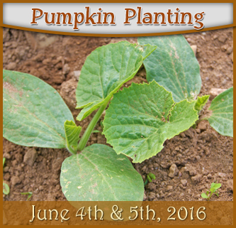 Pumpkin Planting - June 4th & 5th, 2016