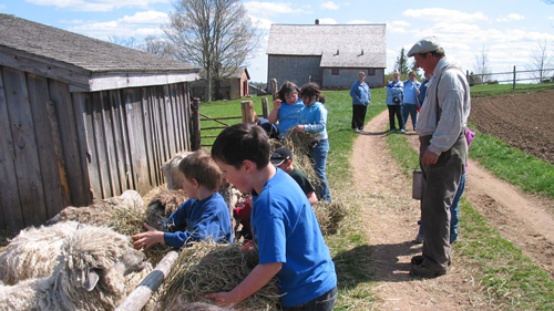 School Program Farm Animals