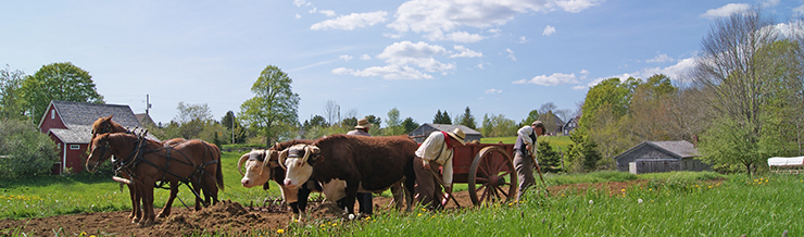Working-Farm-Header-Image